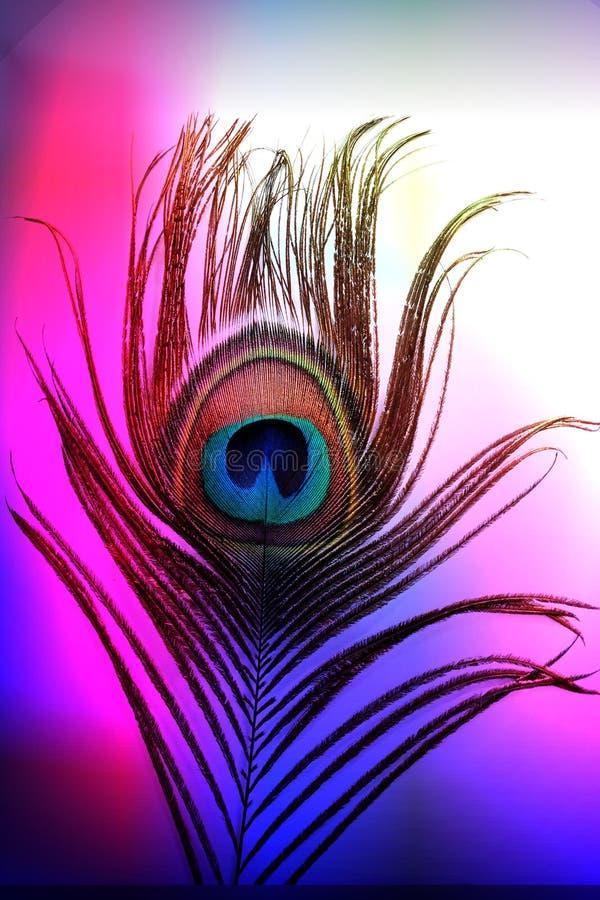Påfågelfader med abstrakt färgrik skuggad bakgrund också vektor för coreldrawillustration stock illustrationer