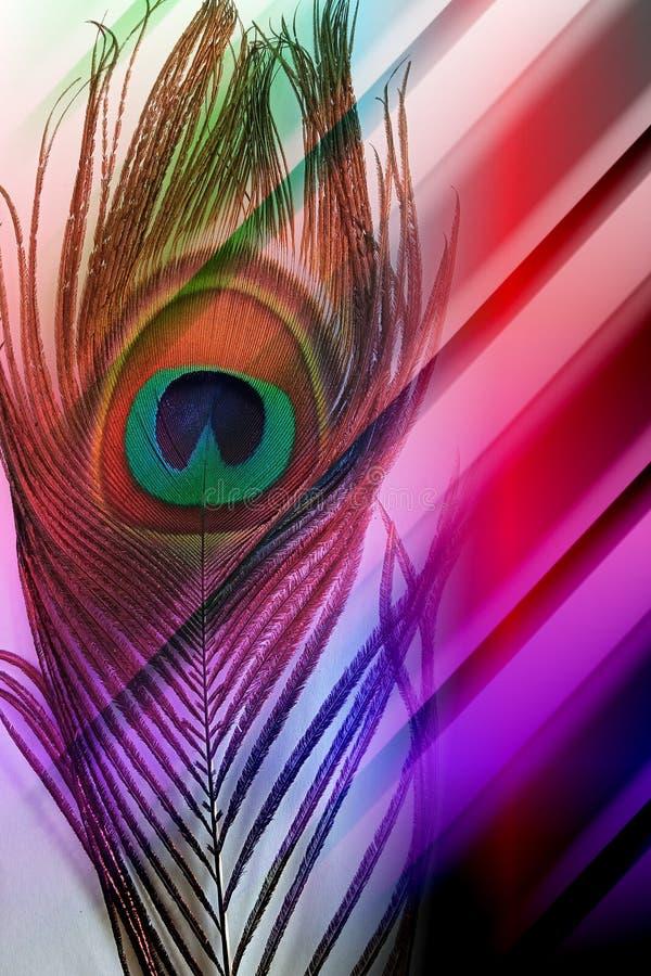 Påfågelfader med abstrakt mångfärgad skuggad bakgrund också vektor för coreldrawillustration royaltyfri illustrationer