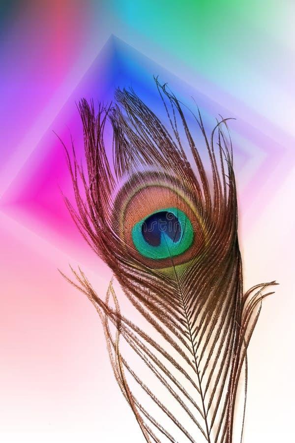 Påfågelfader med abstrakt mångfärgad skuggad bakgrund också vektor för coreldrawillustration stock illustrationer