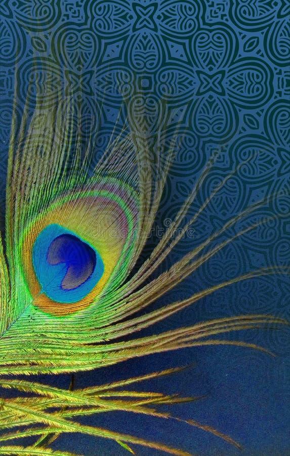 Påfågelfadern med abstrakta vektorblått skuggade bakgrund också vektor för coreldrawillustration