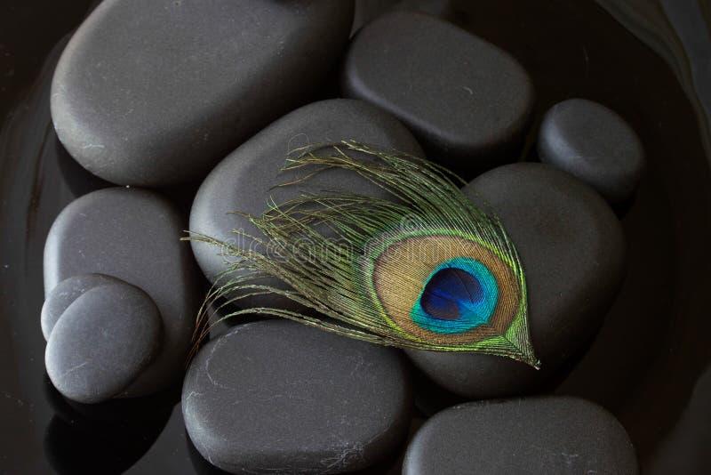 Påfågelfjäder på varma stenar arkivfoton