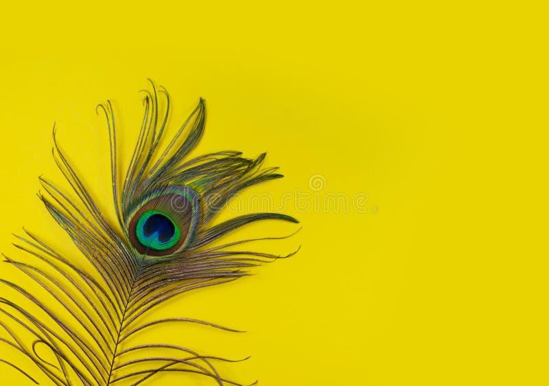 Påfågelfjädern på en gul bakgrund, den bästa sikten, lägenhet lägger Ljusa f?rger f?r trend Utrymme f?r text royaltyfri foto