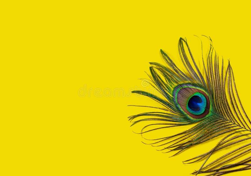 Påfågelfjädern på en gul bakgrund, den bästa sikten, lägenhet lägger Ljusa f?rger f?r trend Utrymme f?r text arkivfoton