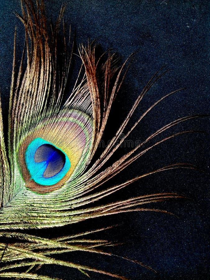 Påfågelfjäderslut som isoleras upp på en svart bakgrund royaltyfria foton