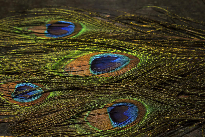 Påfågelfjädrar med livliga färger arkivbilder