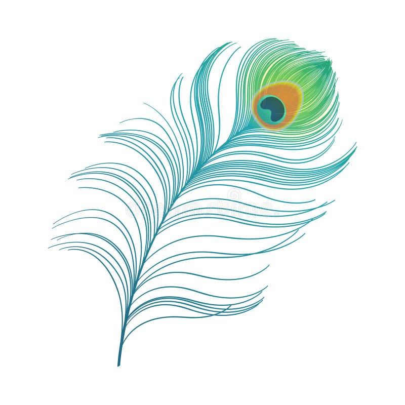 Påfågeln putsar färgrik fjädervektor royaltyfri illustrationer