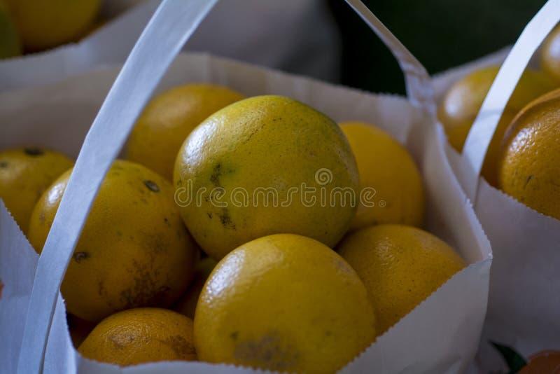 Påsar av nya florida fullvuxna apelsiner royaltyfria foton