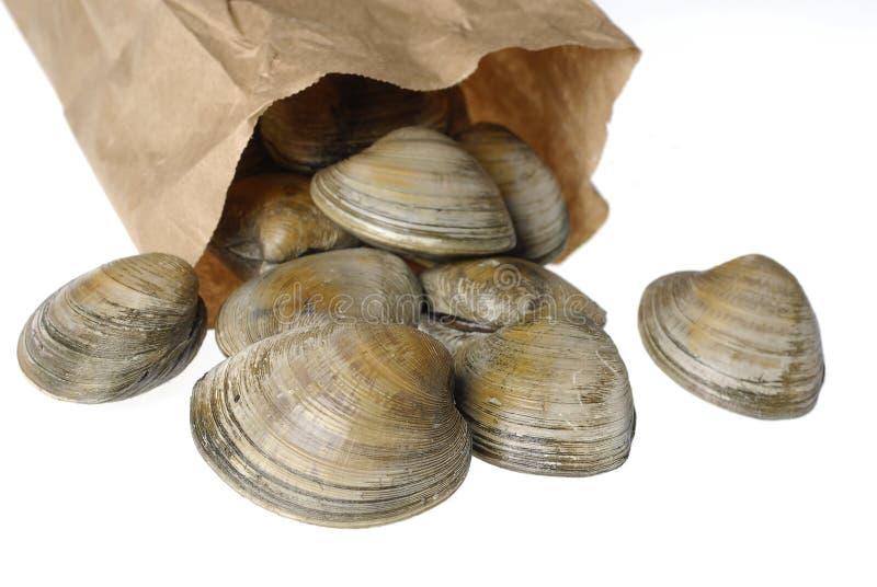 påsen samlar musslor det paper fotomaterielet arkivbild