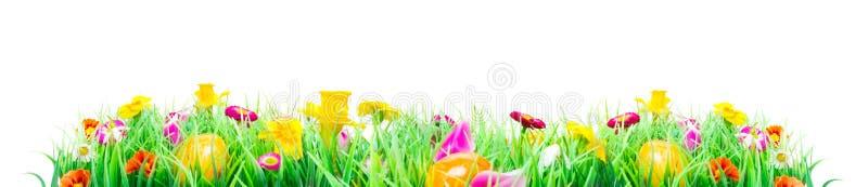 Påskägg, blommaäng som isoleras royaltyfri bild