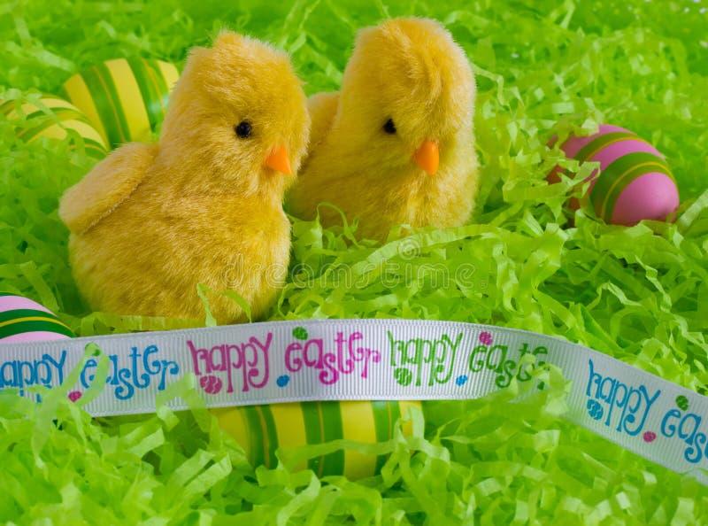 Påsk - två lyckliga påskgulingfågelungar med grön bakgrund för randiga ägg royaltyfria bilder