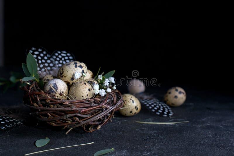 Påskbegrepp - dekorativt pilrede med vaktelägg, fjäder på mörk rostig bakgrund Copyspace royaltyfri foto