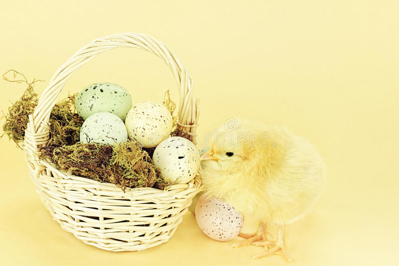 Påskfågelunge och ägg royaltyfria foton