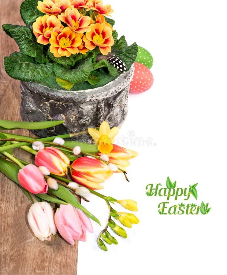 Påskgräns med vårblommaandeggs på trä och vitbaksida royaltyfri bild