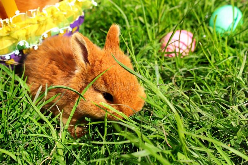 Påskkanin i grönt gräs med korgen och färgrika ägg royaltyfria bilder