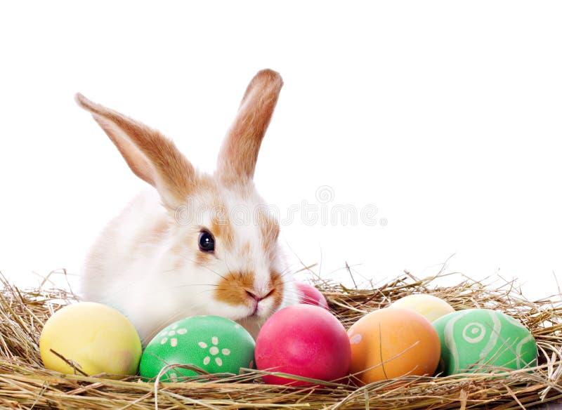 Påskkanin och kulöra ägg fotografering för bildbyråer