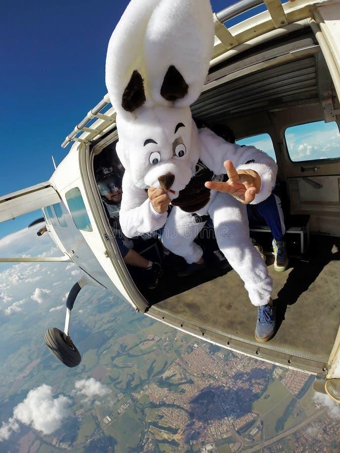 Påskkaninen hoppar med fritt fall på flygplandörren fotografering för bildbyråer