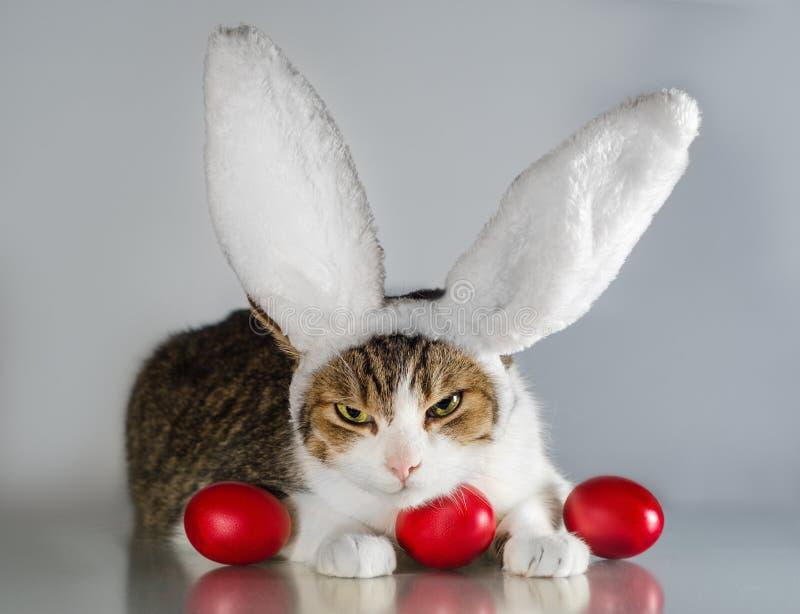 Påskkatt i vakter för kaninöron tre röda ägg arkivfoton