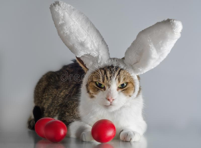 Påskkatt i vakter för kaninöron tre röda ägg royaltyfria foton