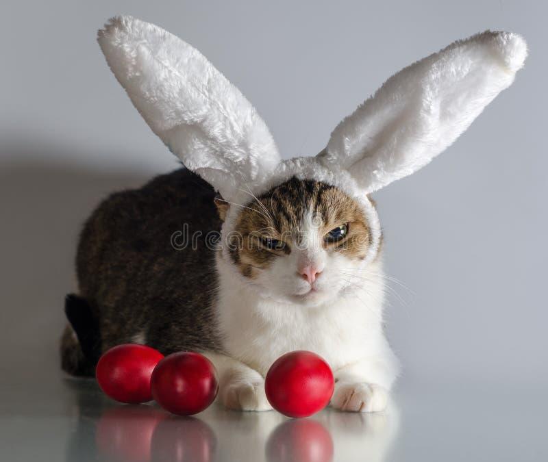 Påskkatt i vakter för kaninöron tre röda ägg royaltyfri bild