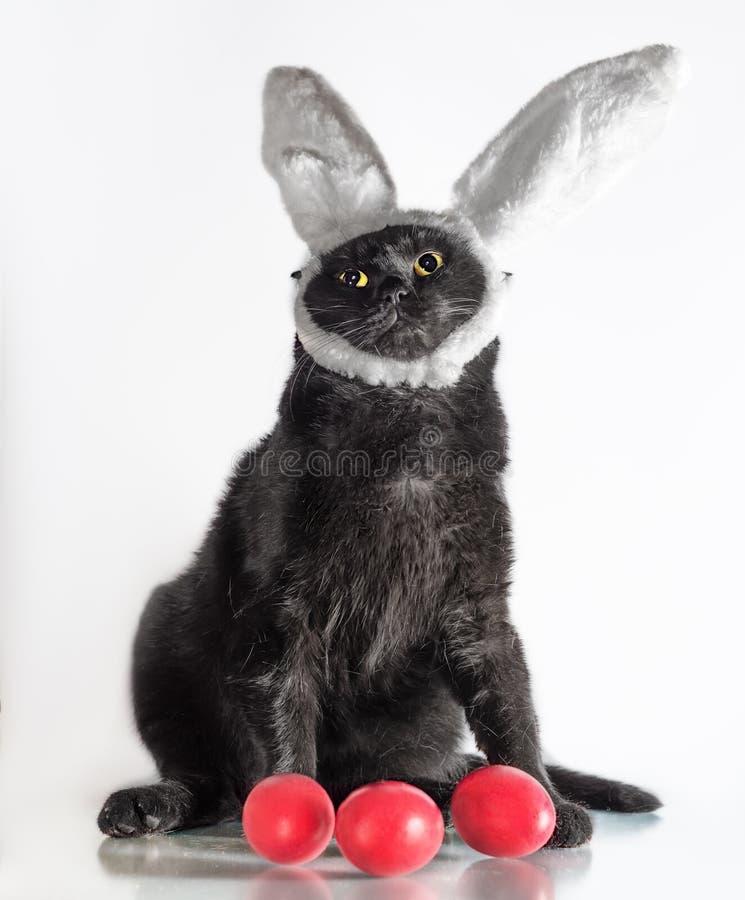 Påskkatt i vakter för kaninöron tre röda ägg arkivfoto