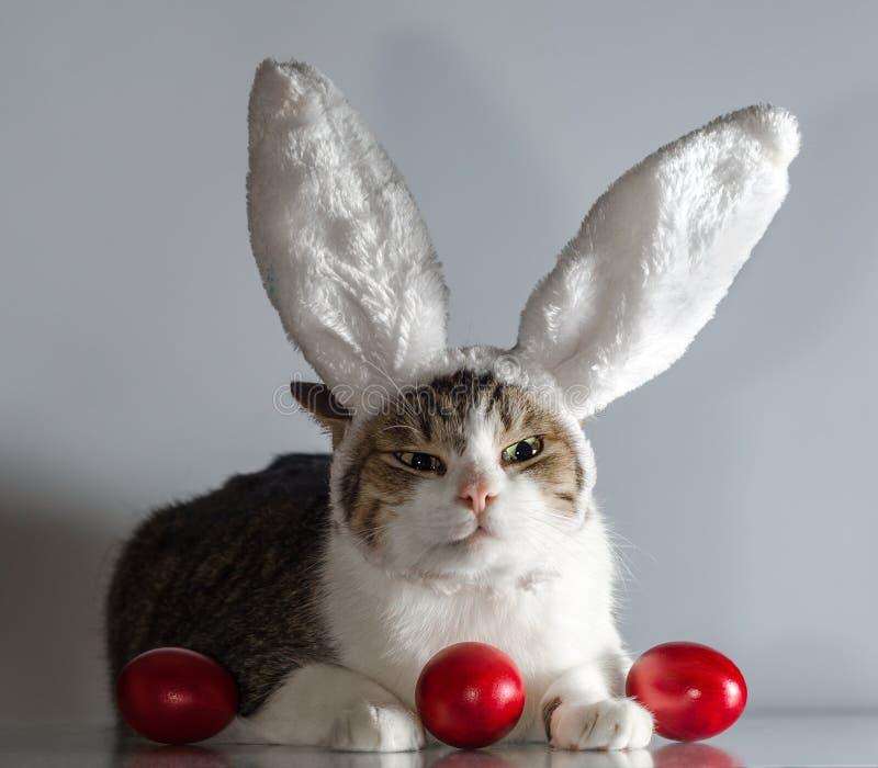 Påskkatt i vakter för kaninöron tre röda ägg fotografering för bildbyråer