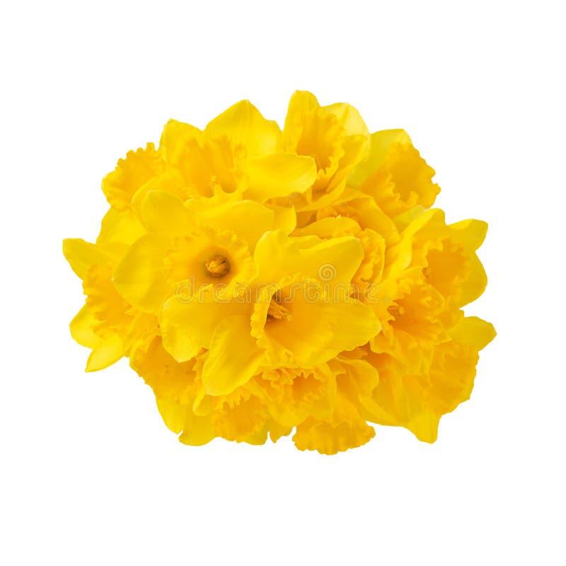 Påskliljablommor gulnar för att blomma ljus sammansättning på vit bakgrund royaltyfri foto