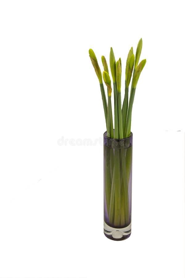 Påskliljan slår ut i den glass vasen royaltyfria foton