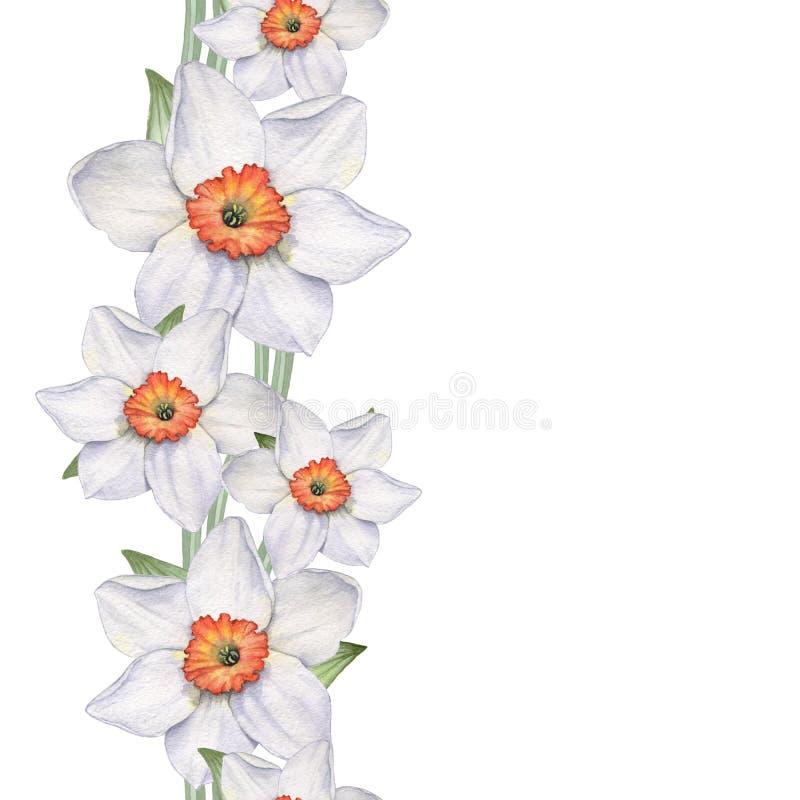 Påskliljor - sömlös gräns vektor illustrationer