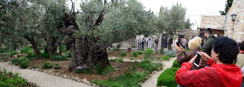 Pèlerins dans le jardin de Gethsemane j?rusalem Panorama photo libre de droits