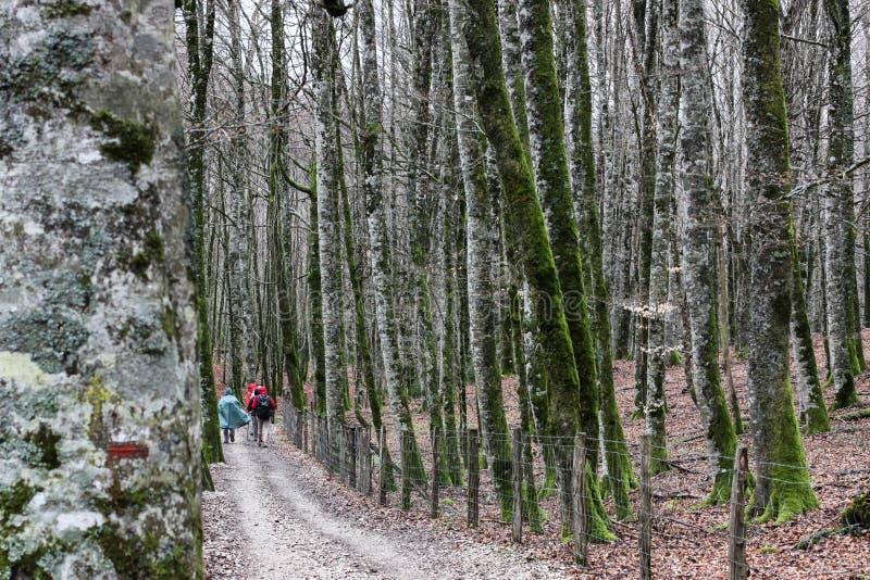 Pèlerins sur le chemin français de Camino De Santiago, Espagne photographie stock