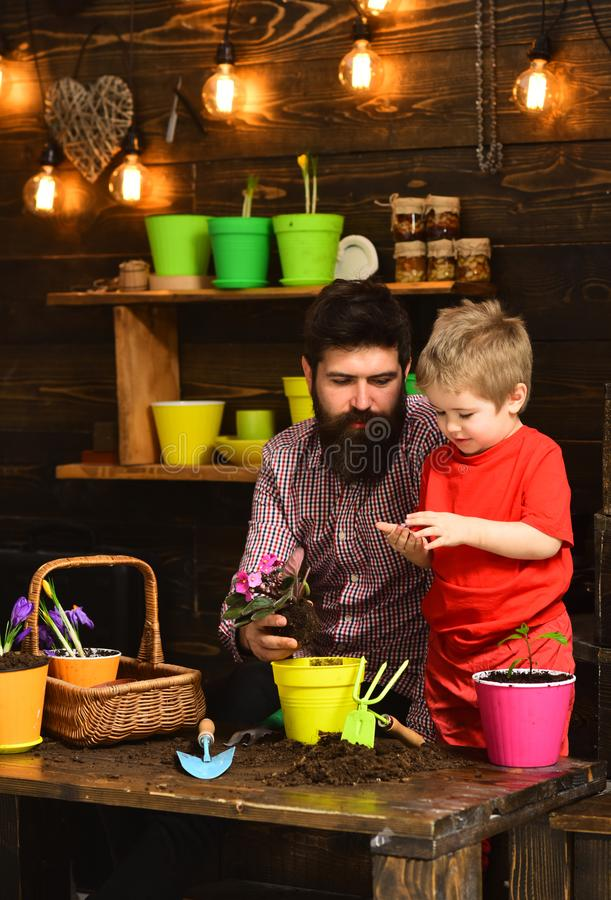 Père et fils jardiniers heureux avec des fleurs de ressort Arrosage de soin de fleur Engrais de sol Homme barbu et petit garçon image libre de droits