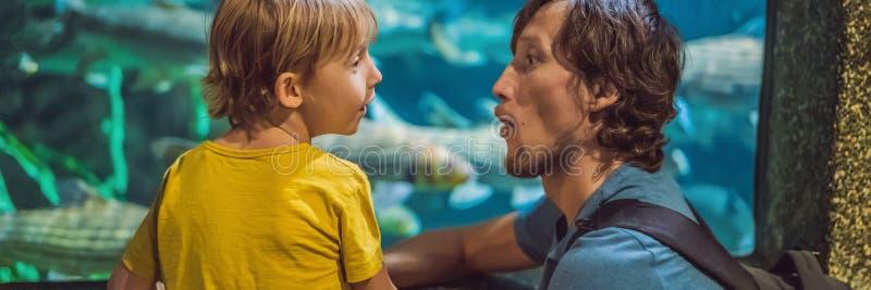 Père et fils regardant des poissons dans une BANNIÈRE d'aquarium de tunnel, LONG FORMAT image stock