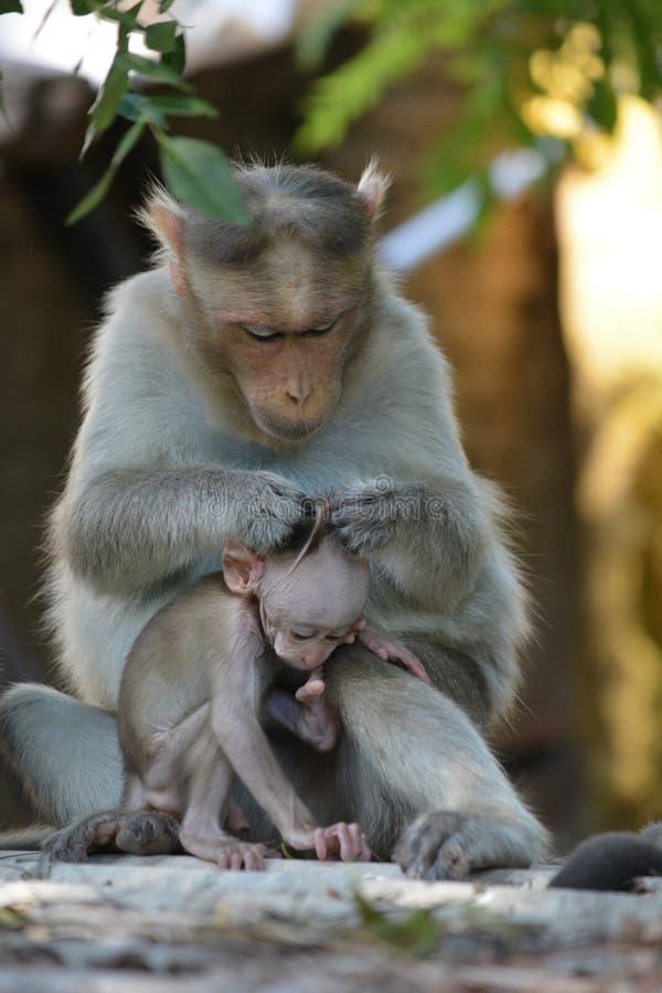 Père et singe infantile images stock