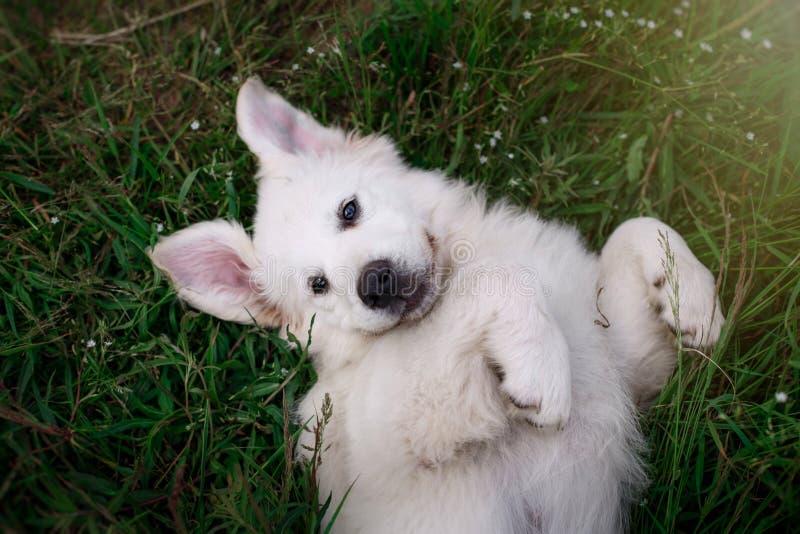Pé bonito do cachorrinho imagem de stock royalty free