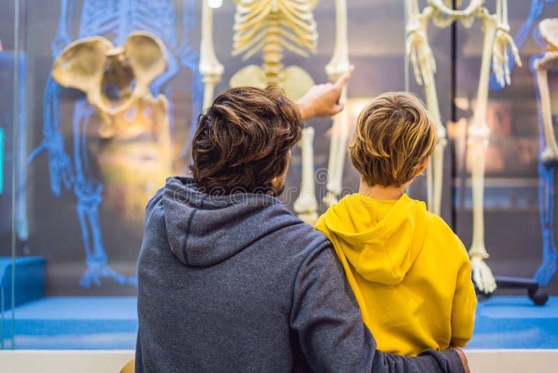 Pékin, Chine, le 16 octobre 2018 : Le papa et le fils observent les squelettes des personnes antiques et modernes Évolution humai photographie stock