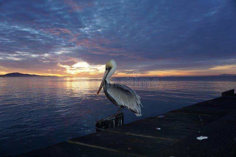 Pélican au coucher du soleil sur le quai de Stearns photos stock