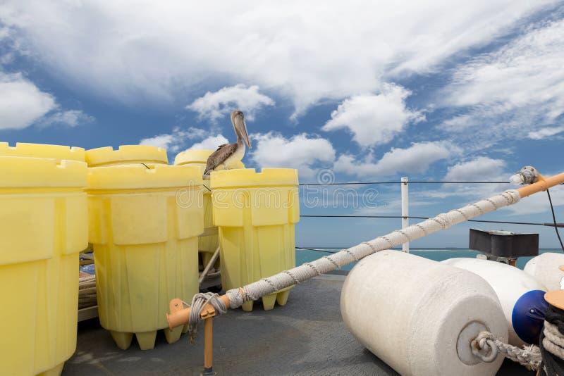 Pélican de Brown sur un bateau photographie stock