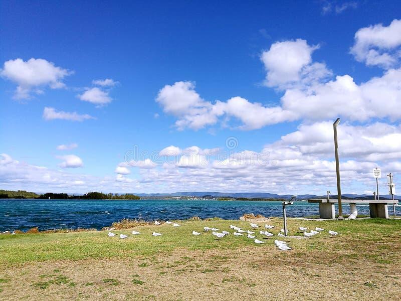 Pélican de Macquarie de lac @, Australie de NSW photo libre de droits
