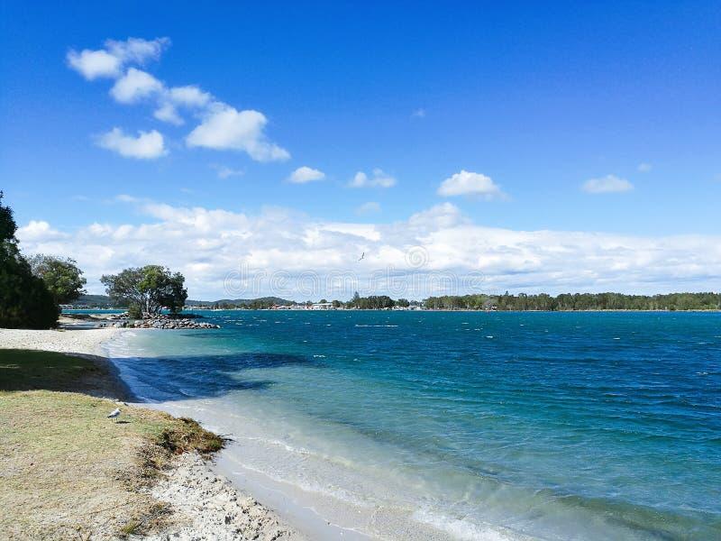 Pélican de Macquarie de lac @, Australie de NSW photographie stock libre de droits
