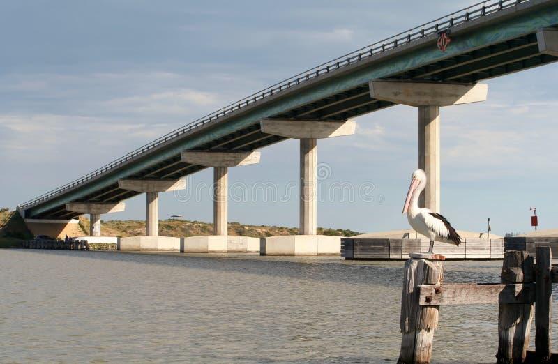 Pélican et passerelle d'île de Hindmarsh image libre de droits