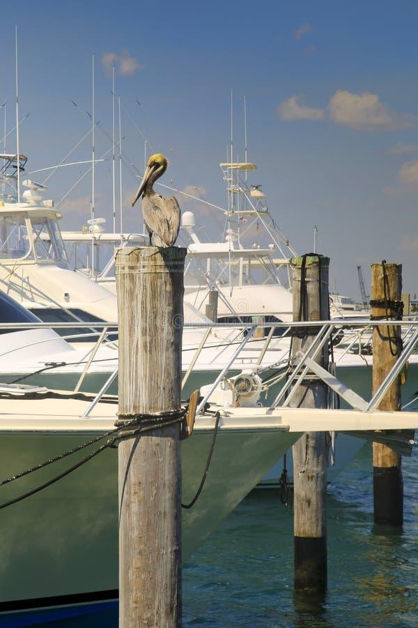 Pélican, marina, West Palm Beach, la Floride, Etats-Unis image libre de droits