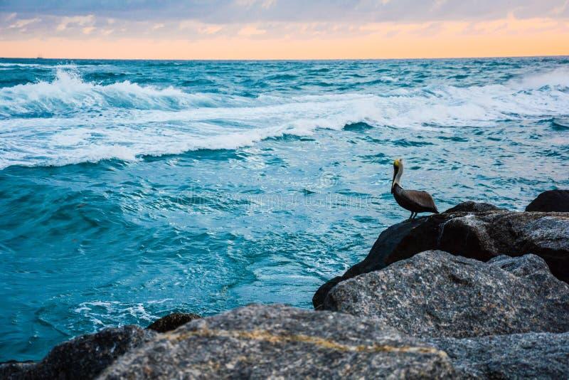 Pélican posant sur Rocky Shore photo stock