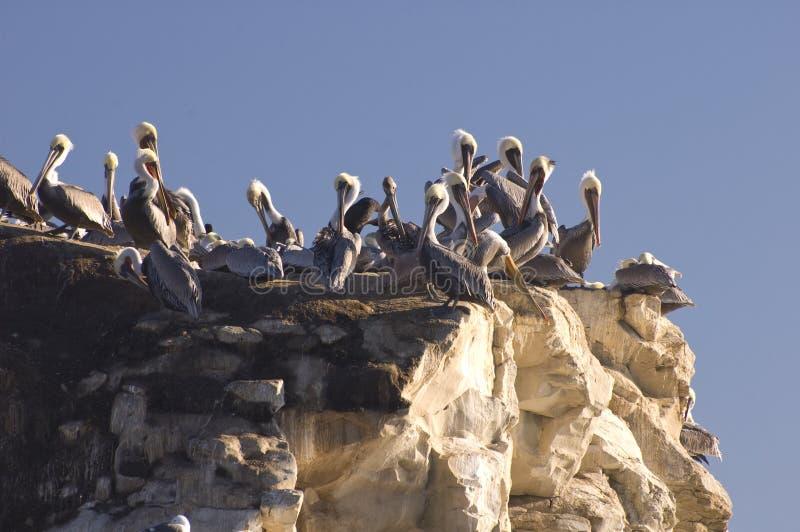 Pélicans au coucher du soleil photo libre de droits