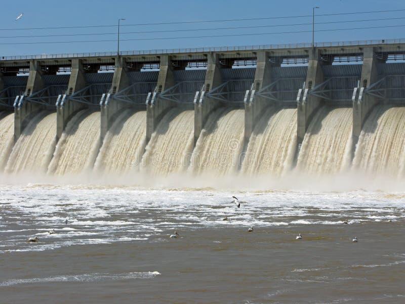 Pélicans pêchant au-dessous du barrage photo stock