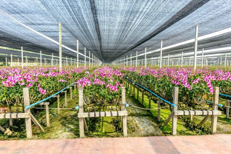 Pépinière d'usine d'orchidée images stock