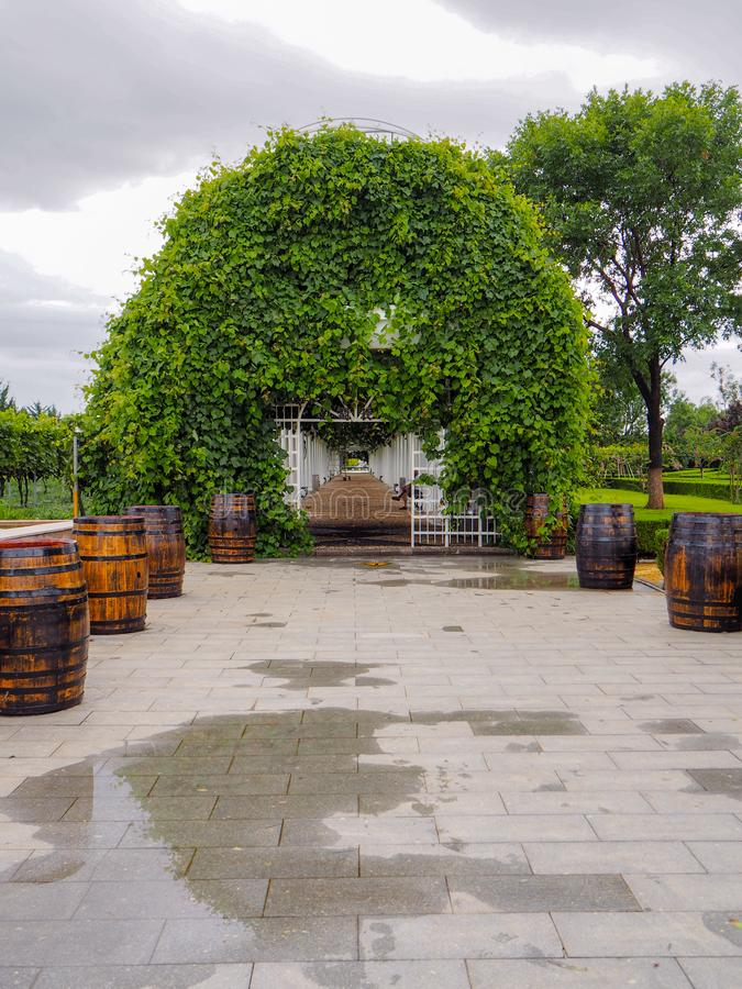 Pérgola enorme cubierta en vides de uva en el estado en Yantai, el productor chino más grande del viñedo de Changyu del vino imagen de archivo libre de regalías
