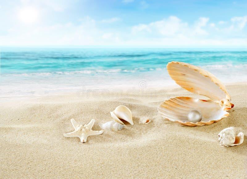 Pérola na praia fotografia de stock royalty free