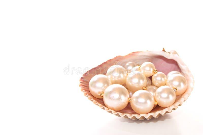 Pérolas em um seashell imagem de stock royalty free