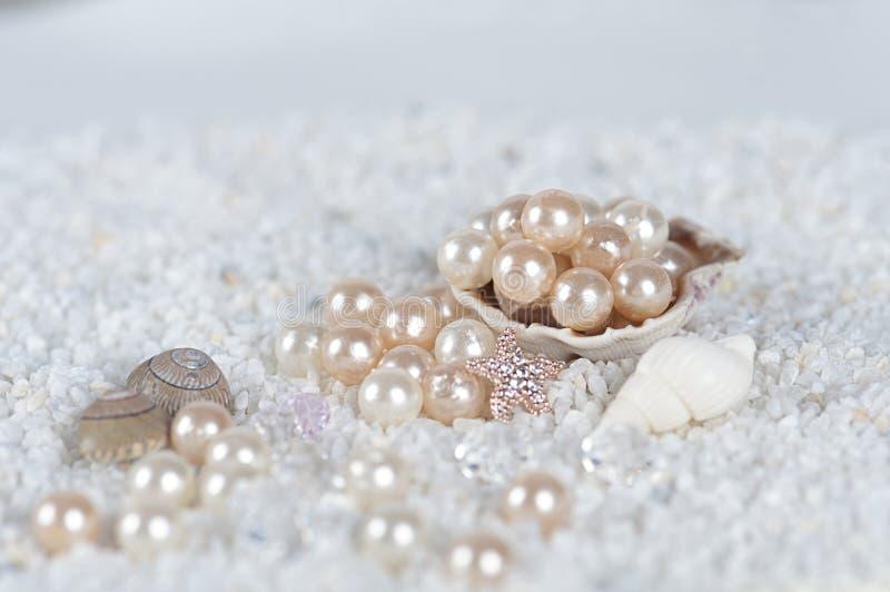 Pérolas no shell do mar imagens de stock