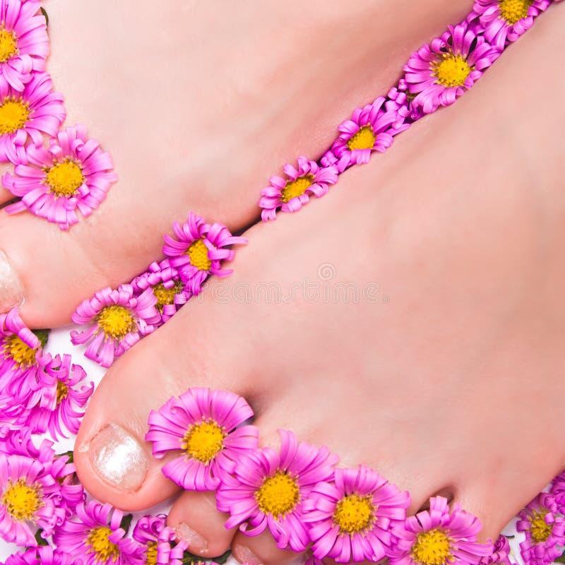 Pés com flores cor-de-rosa fotos de stock royalty free